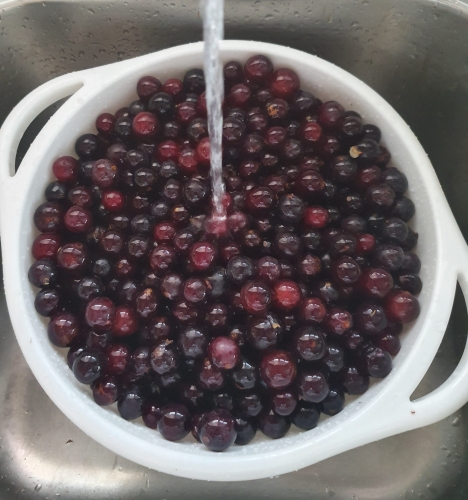 Final rinsing of grapes before mashing in pot and simmering
