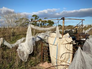 Removing bird netting after table grape harvest